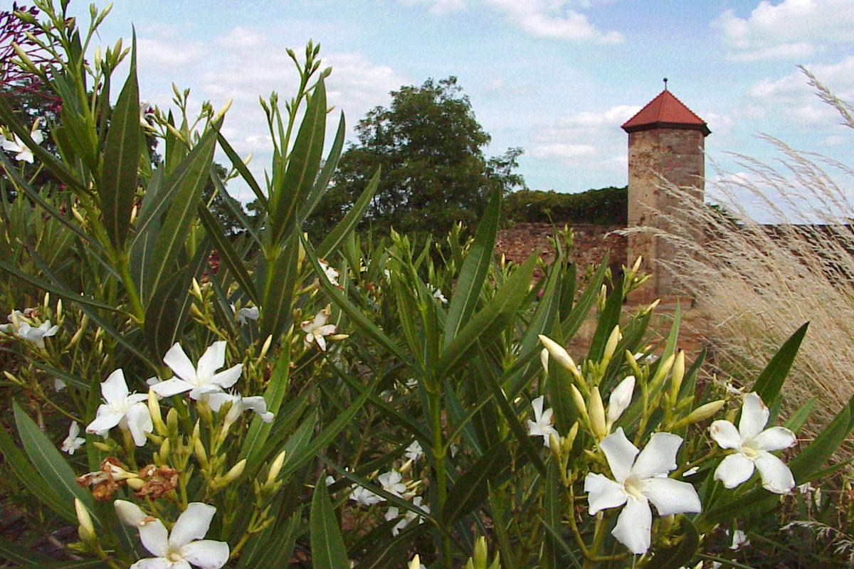 Burgen Burg Altleiningen Neuleiningen Battenberg Schlösser Pfalz ...